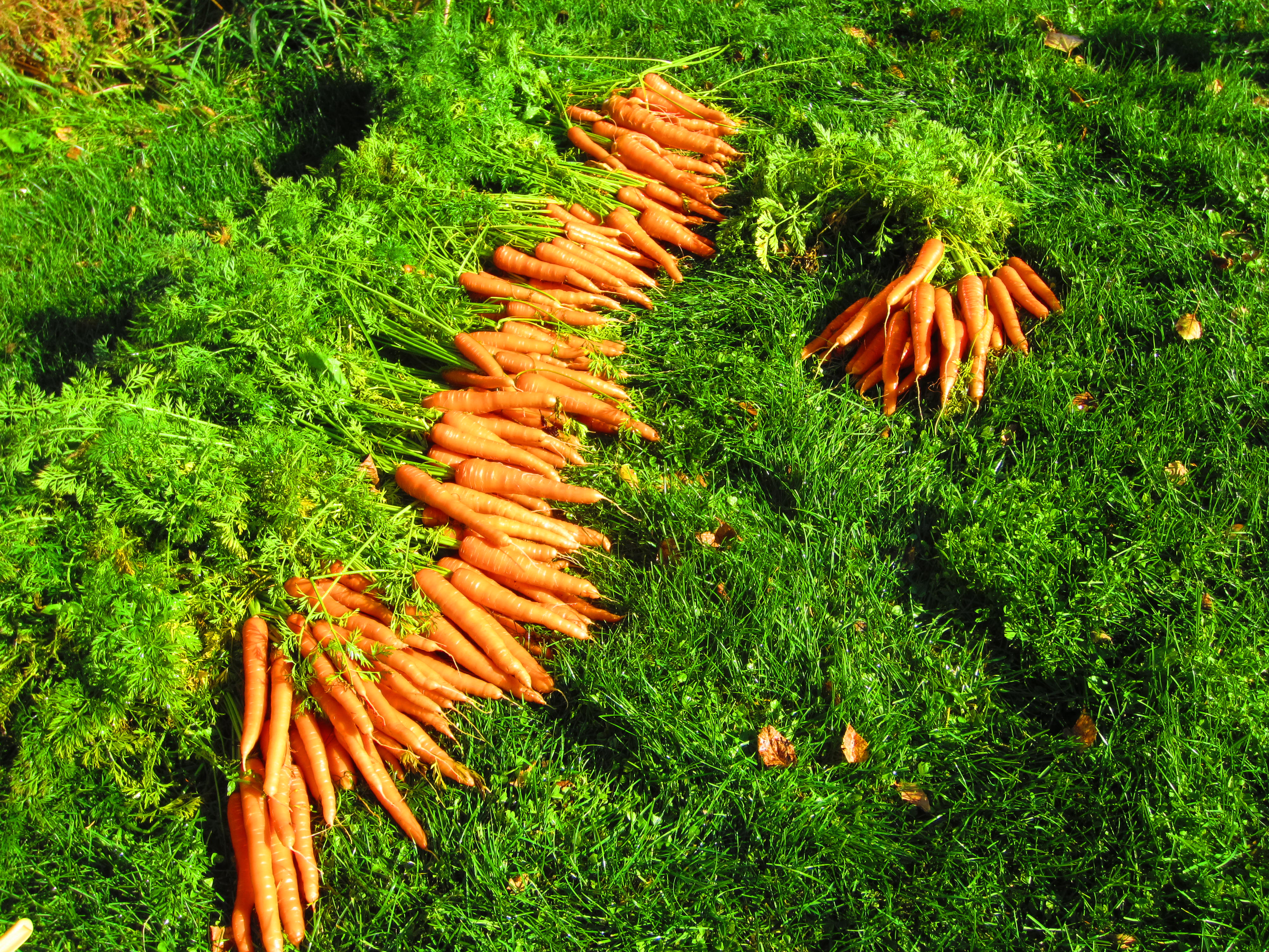Top 10 Vegetable Seeds For High North Gardens
